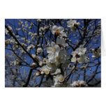 Apricot blossoms cards