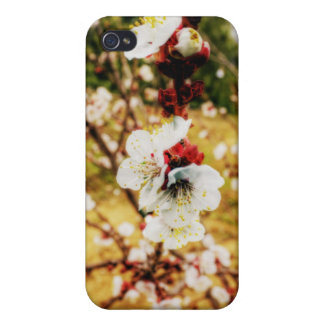 Apricot Blossoms iPhone 4/4S Cover
