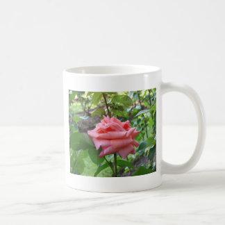 Apricot Candy 035 Coffee Mugs