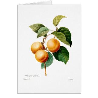 Apricot Card