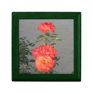 Apricot Cathedral Roses Trinket Box