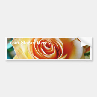 Apricot Colored Rose Closeup Car Bumper Sticker