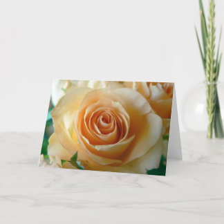 Apricot Colored Rose Closeup Holiday Card