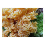 Apricot Coral Fungi Cards