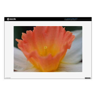 Apricot Daffodil Decal For Laptop