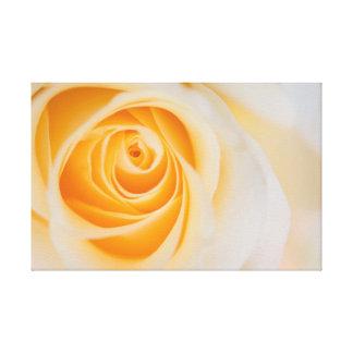 apricot heart rose canvas print