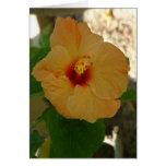 Apricot Hibiscus Flower Greeting Card