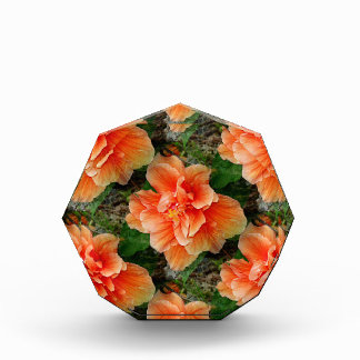 Apricot Hibiscus Tropical Flower Acrylic Award