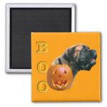Apricot Mastiff Boo Magnet