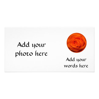 Apricot/Orange colored rose Card