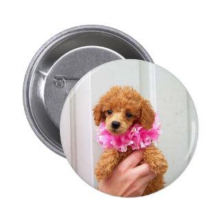 Apricot Poodle  Dog Pinback Button