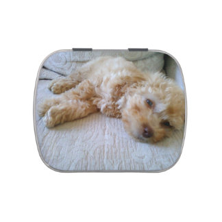 apricot Poodle laying.png Candy Tins
