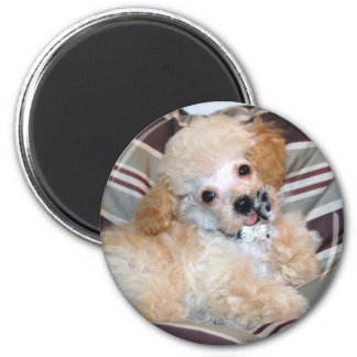 Apricot Poodle Puppy talking  waving 2 Inch Round Magnet
