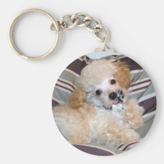 Apricot Poodle Puppy talking  waving Keychain