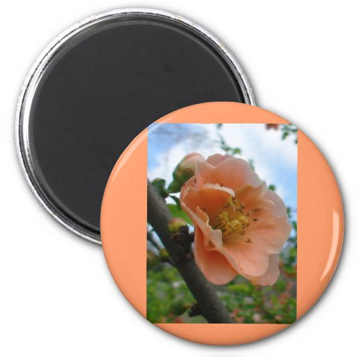 APRICOT QUINCE BLOOM REFRIGERATOR MAGNET
