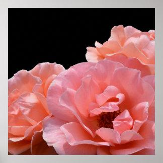 Apricot Rose I Poster