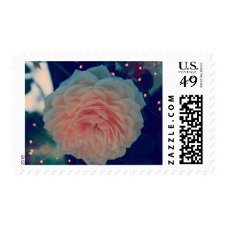 Apricot Rose Postage Stamp