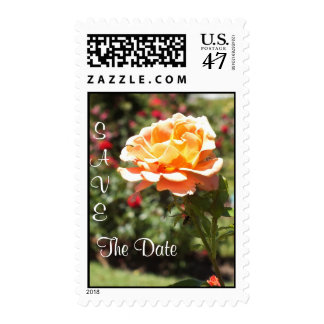 Apricot Rose SAVE THE DATE POSTAGE
