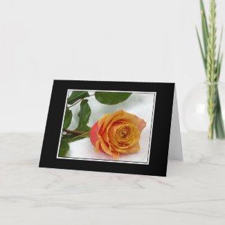 Apricot Rosebud Greeting Card card