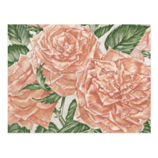 Apricot Roses Flower Garden Painting Postcard