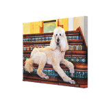 Apricot Standard Poodle - Bocelli Gallery Wrapped Canvas