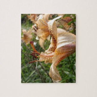 Apricot Tiger Lilies Jigsaw Puzzles