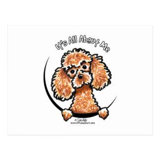 Apricot Toy Miniature Poodle IAAM Postcard