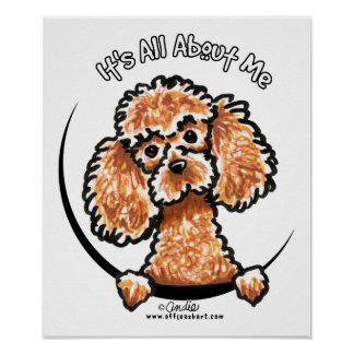 Apricot Toy Miniature Poodle IAAM Poster