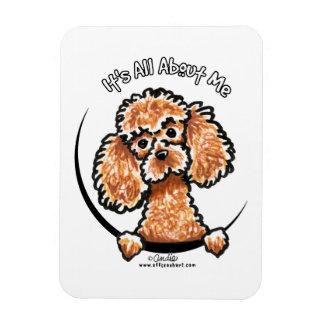 Apricot Toy Miniature Poodle IAAM Rectangular Photo Magnet