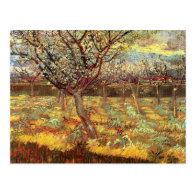 Apricot Trees in Blossom by Van Gogh Post Cards
