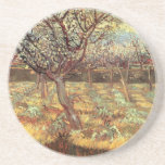 Apricot Trees In Blossom Drink Coaster