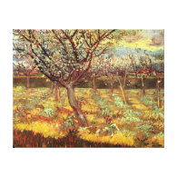 Apricot Trees in Blossom, Vincent van Gogh. Gallery Wrapped Canvas