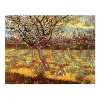 Apricot Trees in Blossom, Vincent van Gogh.  Vinta Postcard