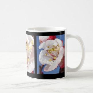 Apricot Triptych Classic White Coffee Mug