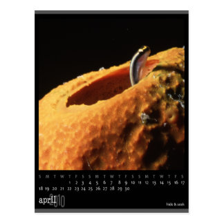 april 2010 calendar postcard