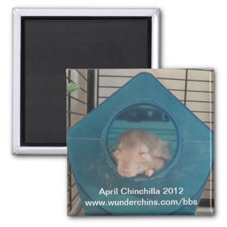 April chinchilla 2012 magnet