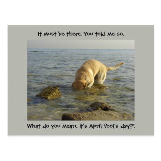 April fool's day - Goofy Labrador Post Card