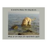 April fool's day - Goofy Labrador Postcard
