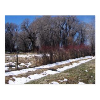 April Pasture Snow Line Postcard