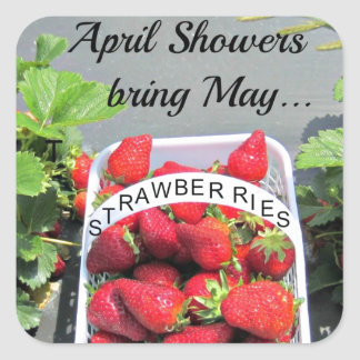 April Showers bring May...STRAWBERRIES! Square Sticker