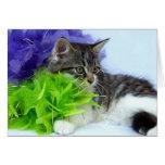 April Wild Kitten Cards