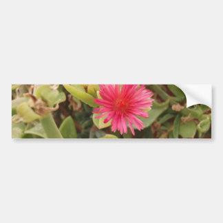 Aptenia Cordifolia Bumper Sticker