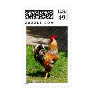 Apuntalar el gallo estampilla