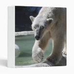 Apuntalar el oso polar