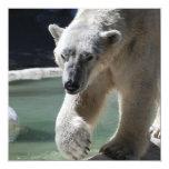 Apuntalar el oso polar anuncio