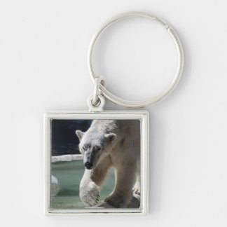 Apuntalar el oso polar llavero