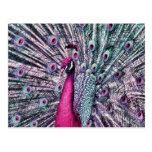 Apuntalar plumas coloreadas fantasía del pavo real tarjeta postal