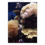 Aqua Birthday Card
