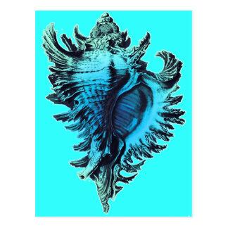 Aqua Blue Sea Shell Postcard