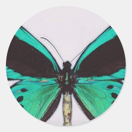 Aqua Butterfly Classic Round Sticker